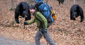 6 Sfaturi despre cum sa te feresti de animale pe traseele de munte