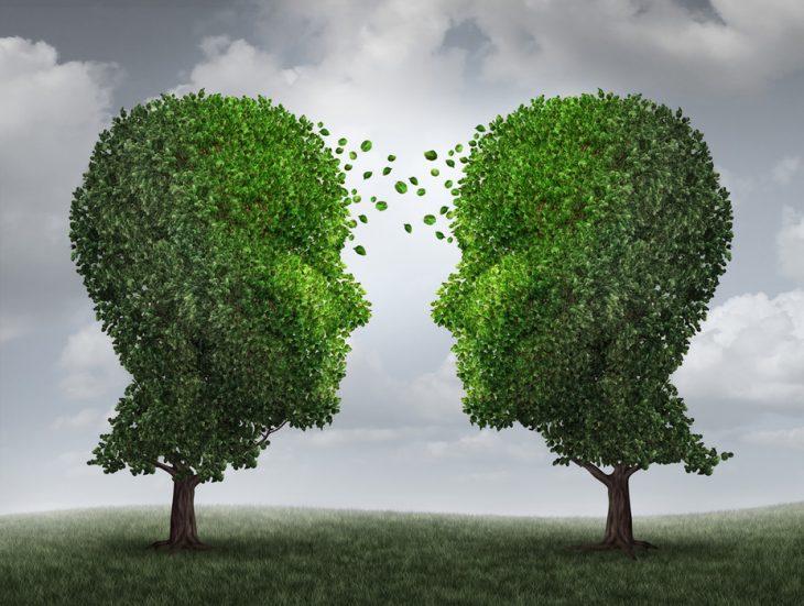 Curiozitati despre copaci – 6 Lucruri care-ti pot starni interesul sa descoperi natura