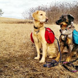 """In drumetii cu cainele, aventura este mai frumoasa daca te """"inarmezi"""" cu aceste 4 lucruri!"""