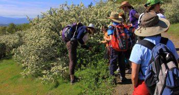 In ce consta initierea in drumetii? Ce presupune pregatirea pentru turele montane?