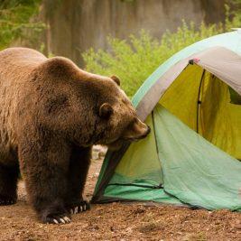 Intalnirea cu ursul - comportamentul corect