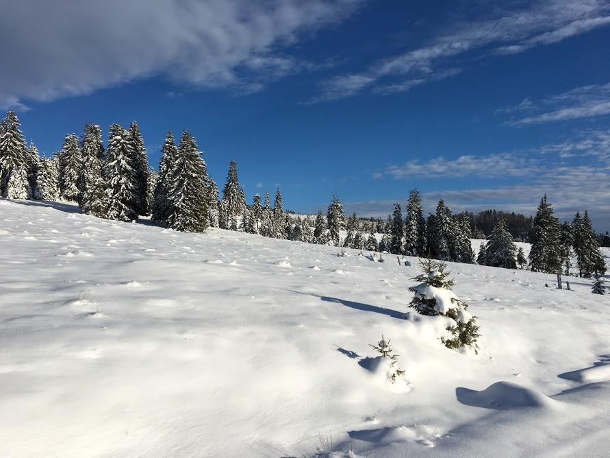 cum sa iubesti iarna - platoul padis